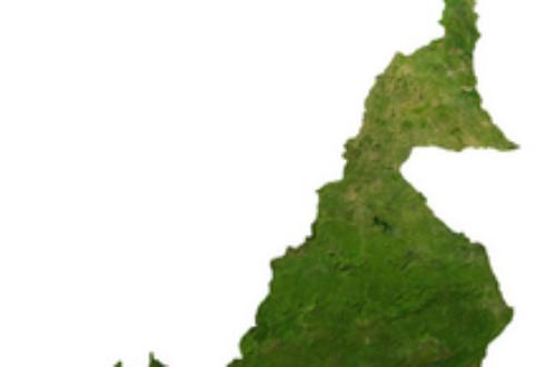 Article : Cameroun: des enfants au cœur du gouffre tribaliste