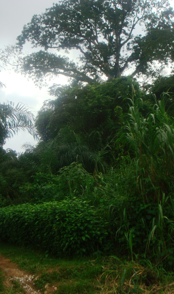 """Le paysage est féérique au village. """"Crédit photo: Josiane"""""""